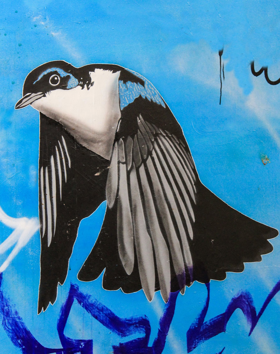 bird, bristol graffitis