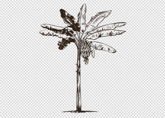 Custom T-shirts - Palm Tree PNG
