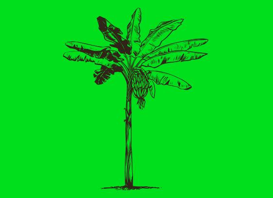 Custom T-shirts - Palm Tree JPG