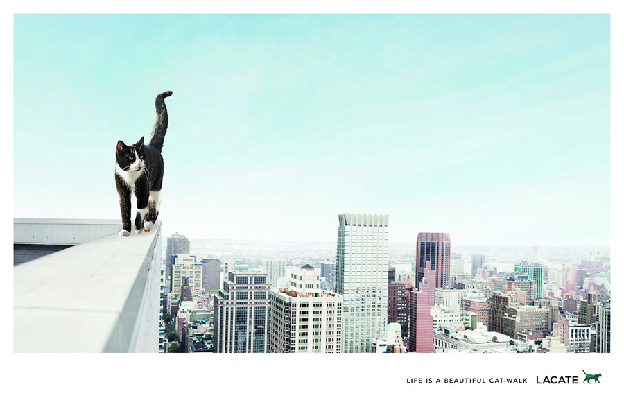 lacoste, lacoste catvertising, lacoste advert, lacoste cat